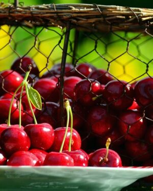 cherries, cherry harvest, fruits